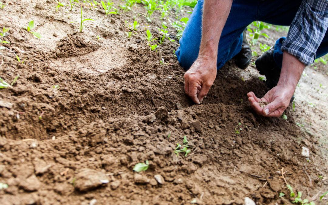 Ser boa terra, cuidar do próprio terreno – isso ninguém fará por nós… nem Deus